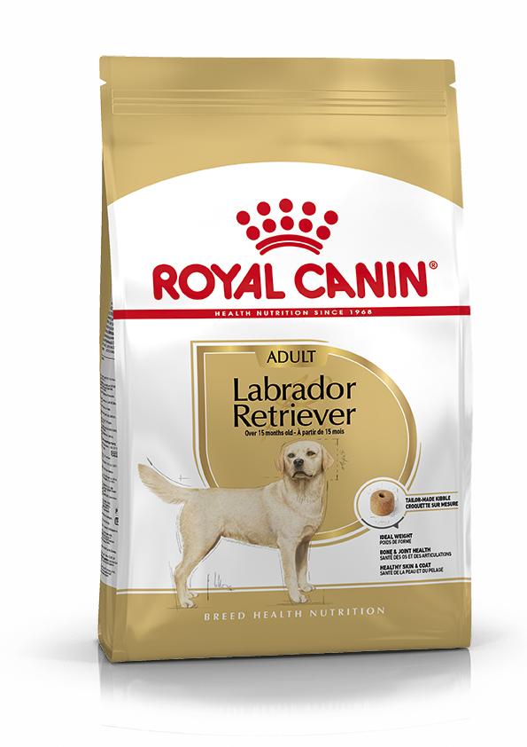 Labrador retriever 12 Kg.