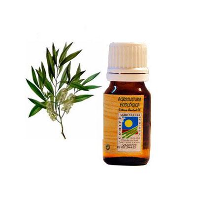 Aceite esencial arbol del te 10 ml. Ecoaromuz
