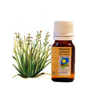 Aceite esencial Citronela 10 ml. Ecoaromuz