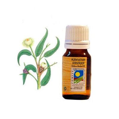 Aceite esencial Eucalipto 10 ml. Ecoaromuz