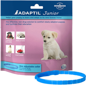 DAP ADAPTIL JUNIOR COLLAR