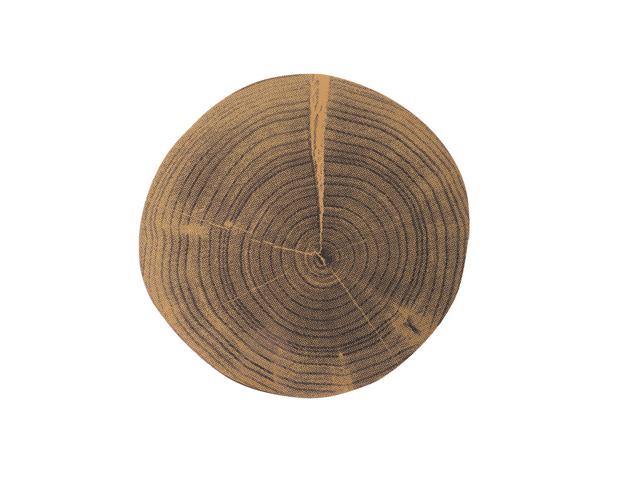 Placa tronco