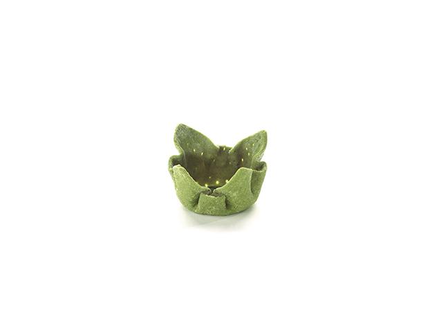 Tulipa espinaca